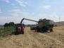 A máme tu sklizeň pšenice – za nádražím…. (25. července 2014)