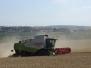 Sklizeň pšenice  – tentokrát na terasách…..27. července 2014