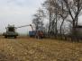 Sklízíme kukuřici... (13. listopadu 2014)