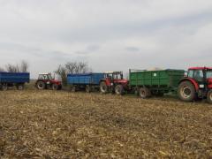 Sklízíme kukuřici... (13.11.2014)